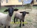 Jesus ruft die verlorenen Schafe