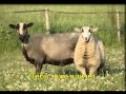 Kличет Иисус потерянных овец