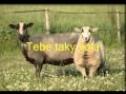 Volá Ježíš ovce ztracené * píseň z alba Nové písně 1