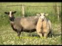Jesus is calling the lost sheep * song with English lyrics * sing Georg Christian CZ